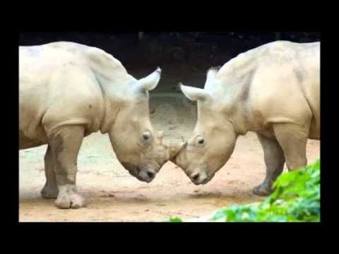 El Rinoceronte. De Scott Alexander.