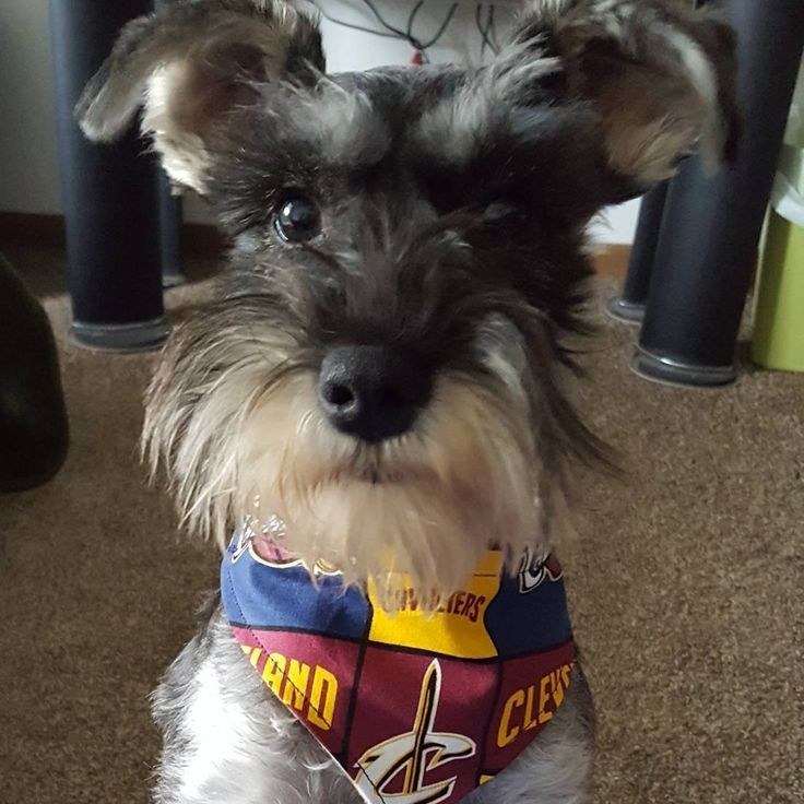 Fergus is ready for the Cavs game tonight.