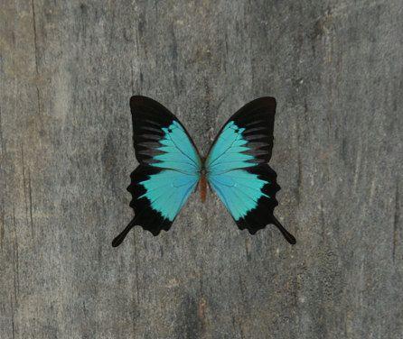 Butterfly tijdelijke Tattoo - Butterfly Tattoo