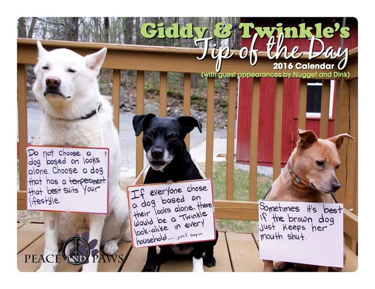 Love our Tips of the Day? Get them all year! Head over to www.peaceandpaws.org and order your 2016 calendar today!