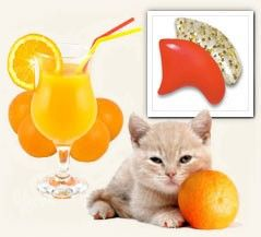 15 best paws aginst declawing images on pinterest animal