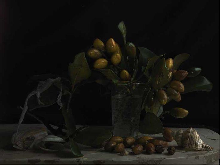 Fiona Pardington, Still Life with Karaka Drupes & Gecko Skin