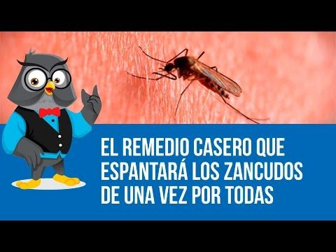 Difusor repelente anti mosquitos, comprobado. Ecológico y casero (mosquitoes protection) by Pilar. - YouTube