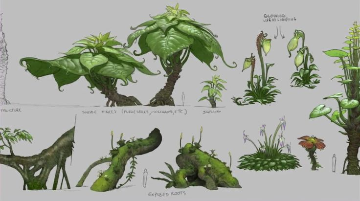 Plants ✤ || CHARACTER DESIGN