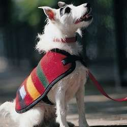 White dogs and bright Pendleton blankets.    Jack Russell Terrier       dog