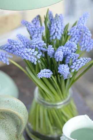 Muscari - styling and photography by Claus Dalby