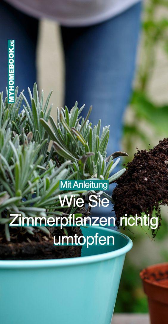 mit anleitung zimmerpflanzen richtig umtopfen zimmerpflanzen pflanzen und pflanzen umtopfen