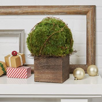 You'll love the Yaxley Preserved Moss Topiary at Birch Lane - With Great Deals on all products and Free Shipping on most stuff, even the big stuff.