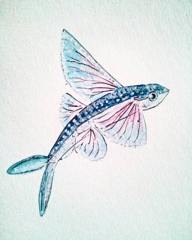 20 best flying fish images on Pinterest   Fish, Pisces and Fishing