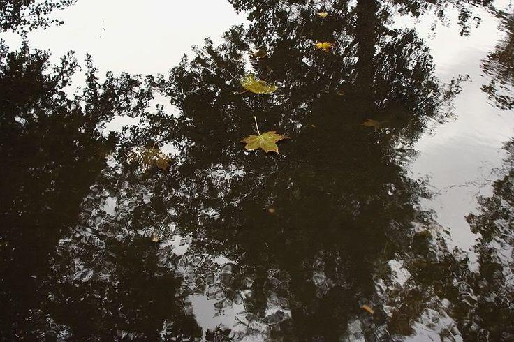 Пасмурный день. Осень. 2007. - Фотограф Александр Слюсарев