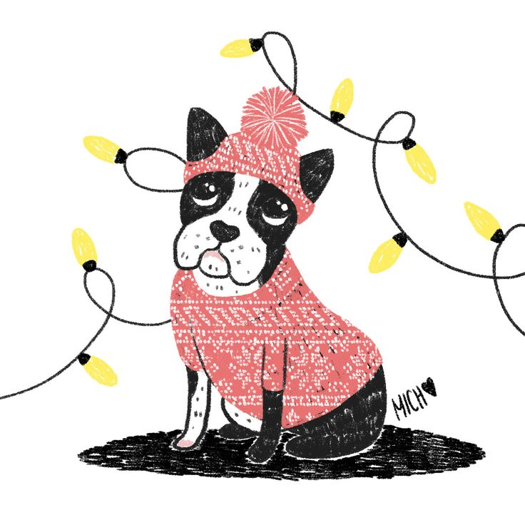 Boston Terrier by Michele Boulay