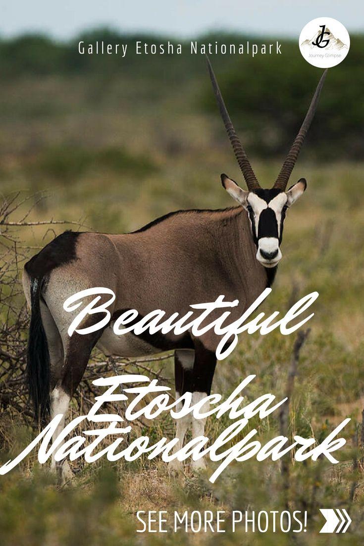 Der Etoscha Nationalpark ist ein Paradies für Tierfreunde. Gemsböcke, Löwen, Kudus, Giraffen, Zebras und Nashörner gibt es zu sehen - auch in unserer Fotogalerie.
