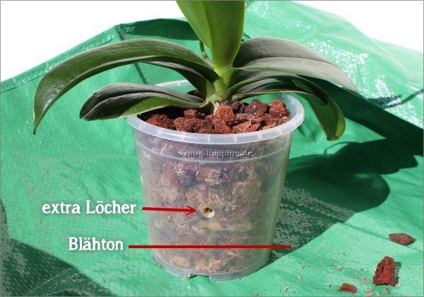 17 besten orchideen bilder auf pinterest zimmerpflanzen. Black Bedroom Furniture Sets. Home Design Ideas