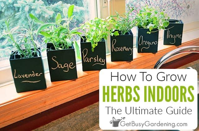 How To Grow Herbs Indoors The Ultimate Guide Get Busy Gardening