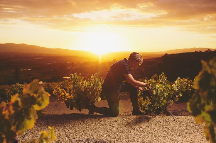 Bosman Family Vineyards Winemaker Corlea Fourie
