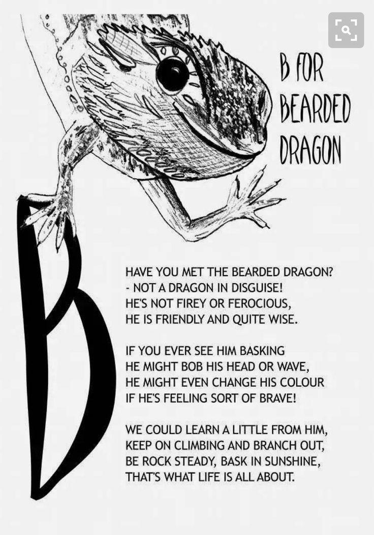 63 Best Bearded Dragon Images On Pinterest Bearded