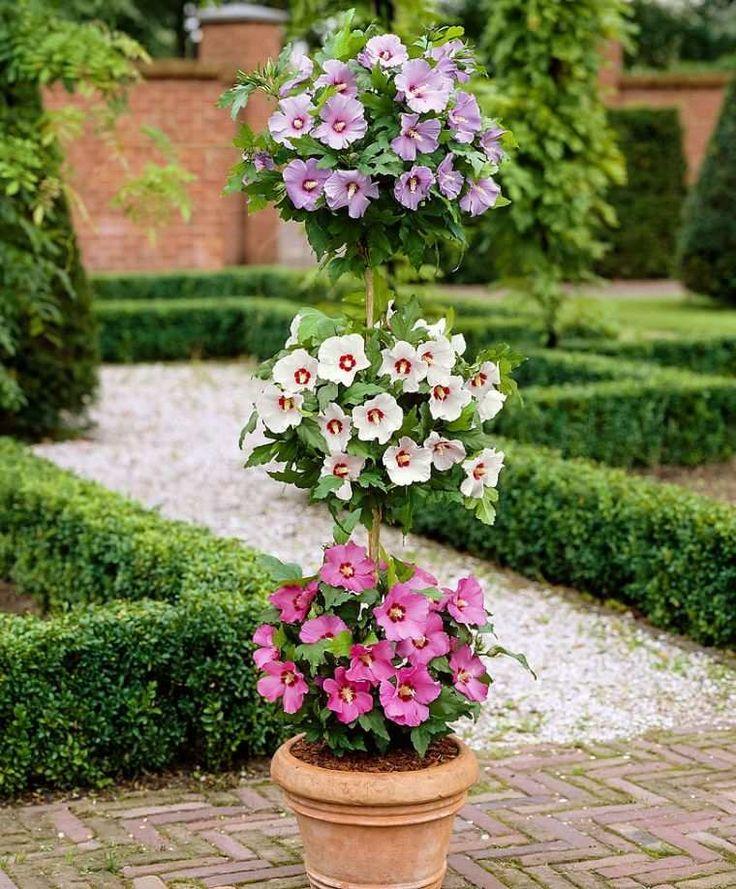 Les 32 meilleures images du tableau pelouse et gazon sur - Comment entretenir un hibiscus ...