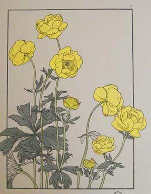 25+ best ideas about Art Nouveau Flowers on Pinterest ...