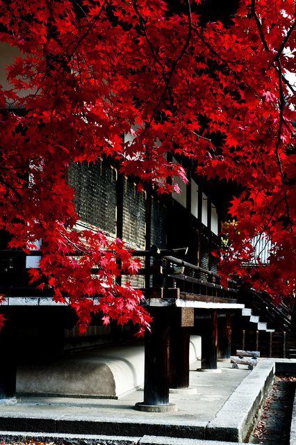Nin-na-ji Temple, Kyoto by jimy40_2008