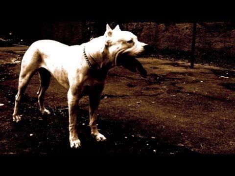 ▶ The Dog Whisperer - Diego and Berkeley(The Dogo Argentino Episode!!!) - YouTube