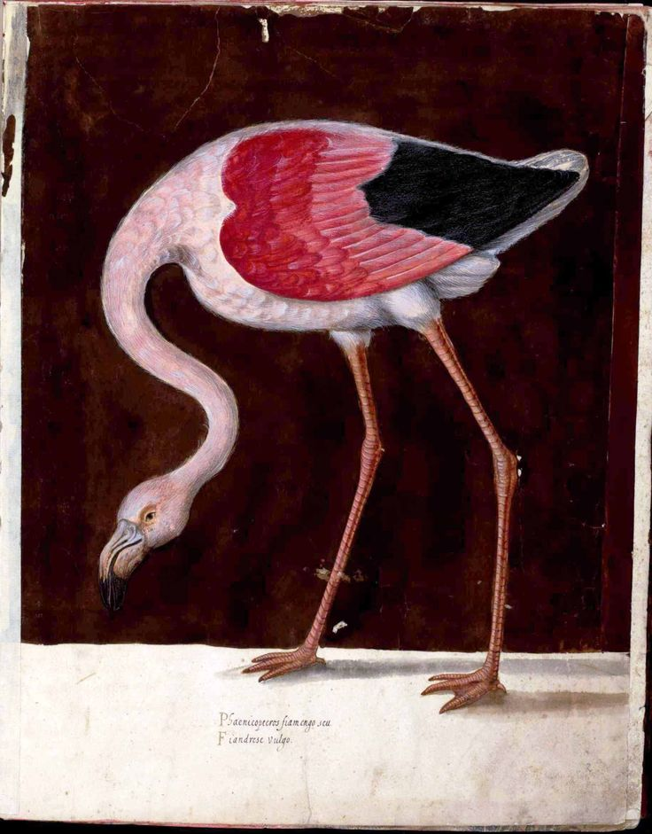 138 best images about Flamingos, vintage and more on ...