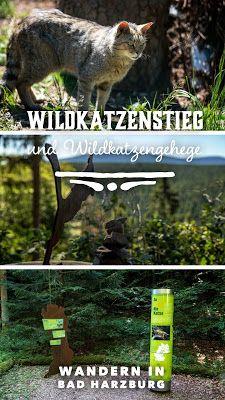 Wildkatzen-Walderlebnis und Wildkatzenstieg zum Wildkatzengehege Bad Harzburg
