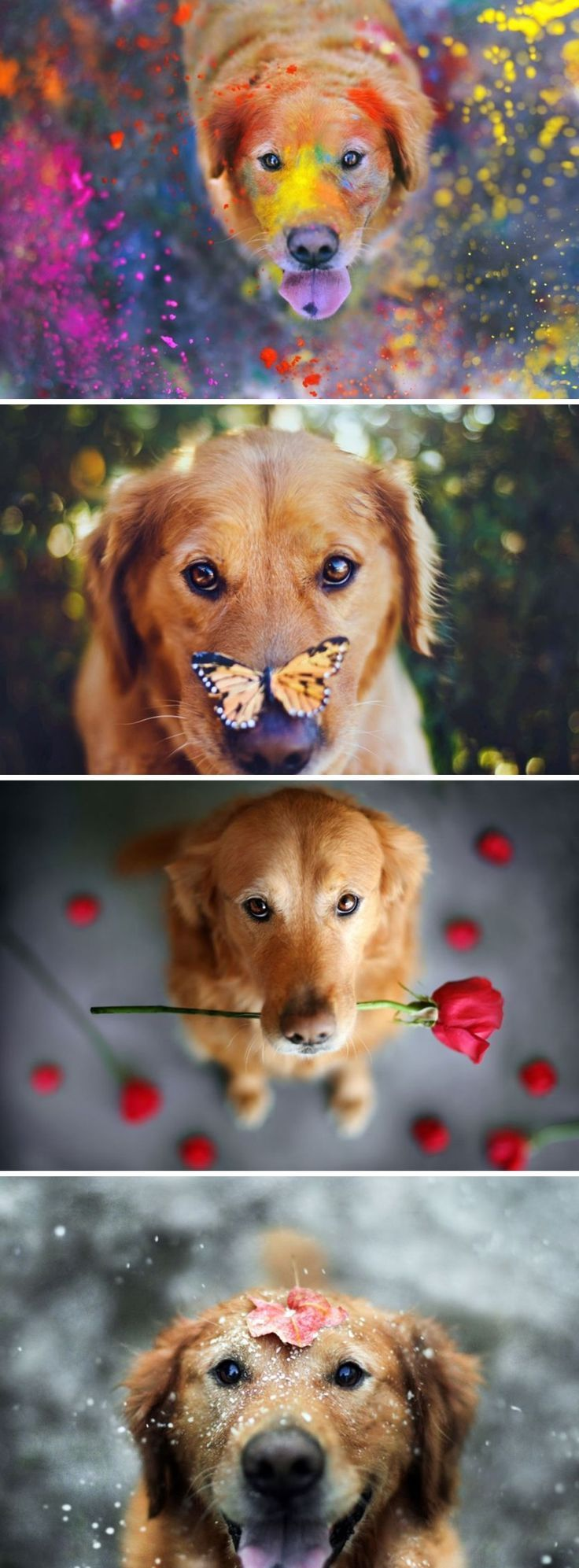 Wonderfully Captivating portraits of Pets by Jessica Trinh