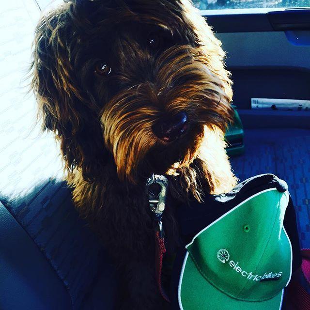 Bailey the bike dog not that impressed with the #uniform Lol. Wait til we get out the Lycra ! #lovemydog #nolycra #letsride