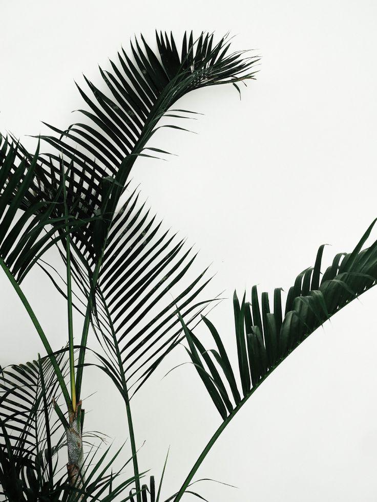 Palmtrees - Johanna P.