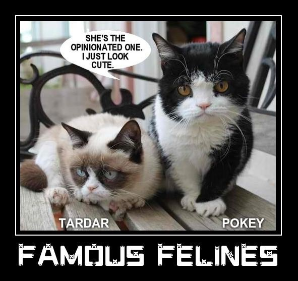 566 Best Grumpy Cat And Pokey Cat Images On Pinterest