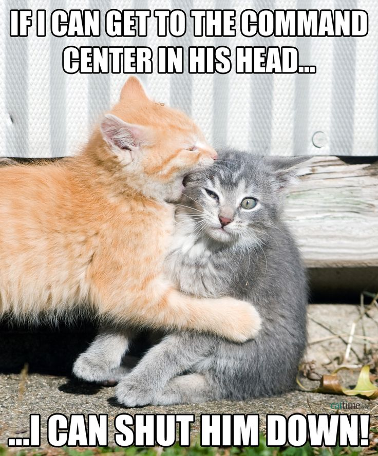 fa5bf13c717d47105c0b3156cc7a468d dozen sad cat 442 best all funny cats! images on pinterest animal funnies,Get Down Cat Meme