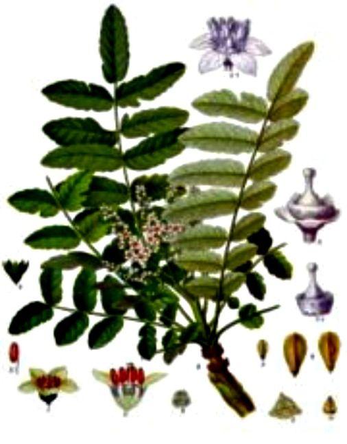 Ibuprofen Natural Health