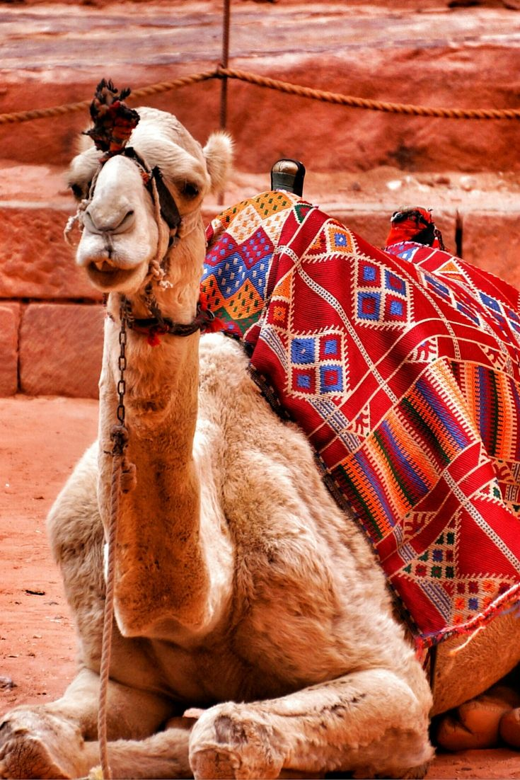 17 best ideas about photo essay examples photo it can be difficult to cute animals in the desert when looking for the animals of petra i figured we would see at least a few from the stories