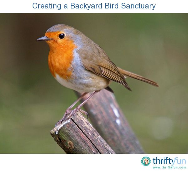 this is a guide about creating a backyard bird sanctuary there are