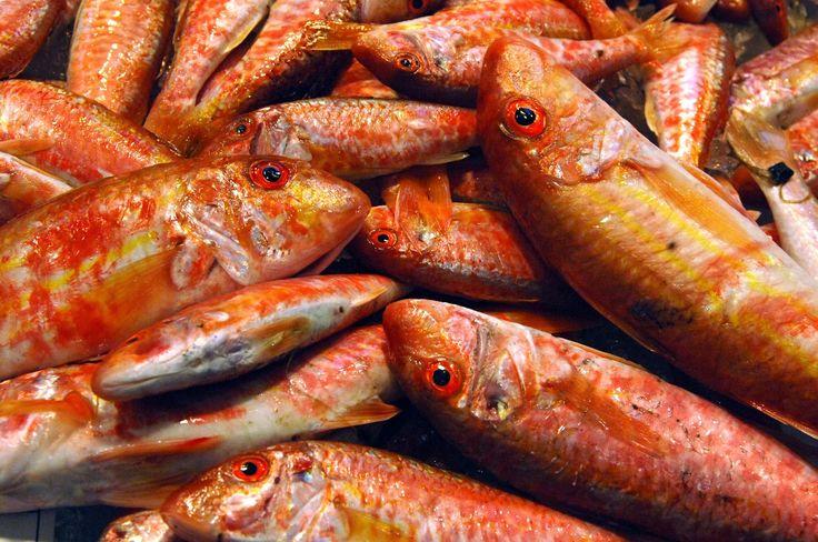 Tidiga morgnar och sena nätter i TORREVIEJA: Världen är full av fula fiskar..