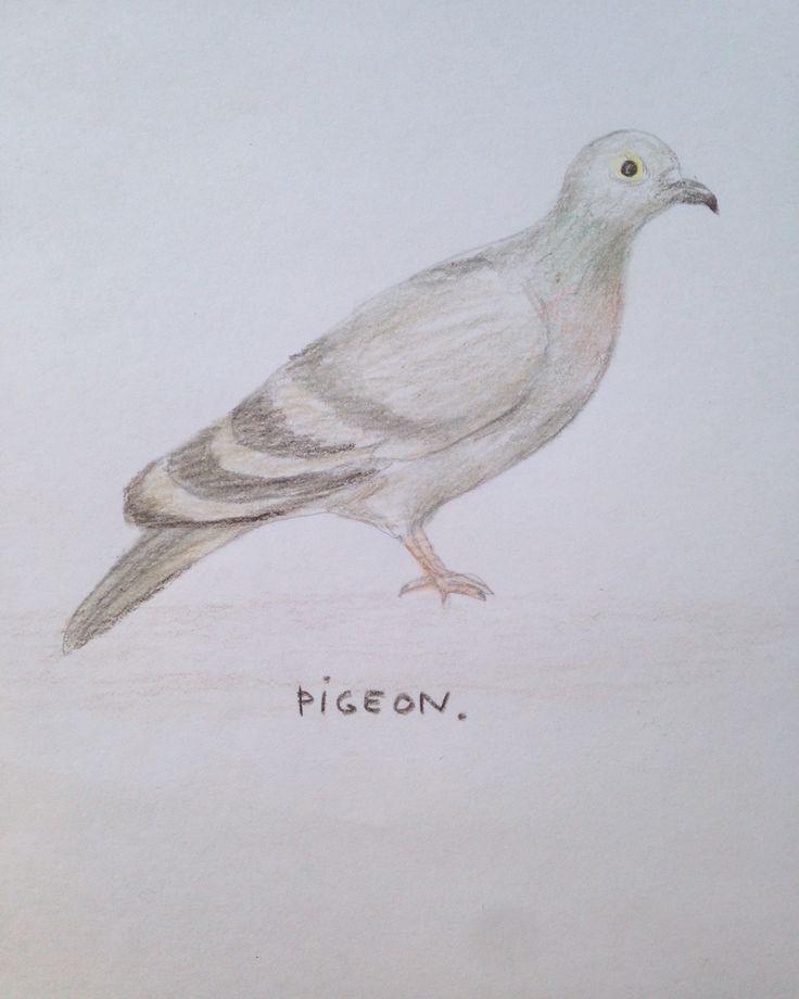 #pigeon #illustration #drawing #floortinga #postcard