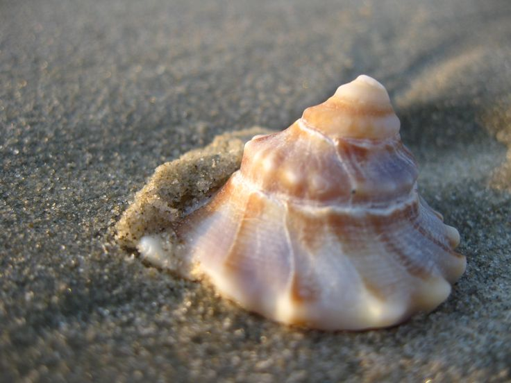 Outer Banks. There was perfect lighting on the seashell!