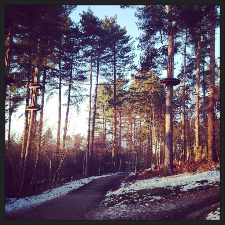 Go Ape over the beautiful Cannock Chase!  #hiking #goape #fun #walking #trees #views #landscape #nature #beautiful