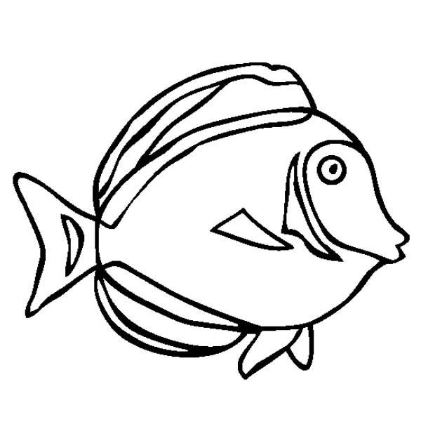 Ocean Animals Coloring Pages | Sea Animals, : Japan Surgeonfish Sea Animals Coloring Page
