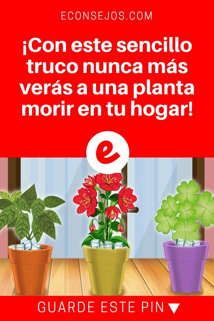 Regar plantas   ¡Con este sencillo truco nunca más verás a una planta morir en tu hogar!   Solamente se sentará a verlas florecer.