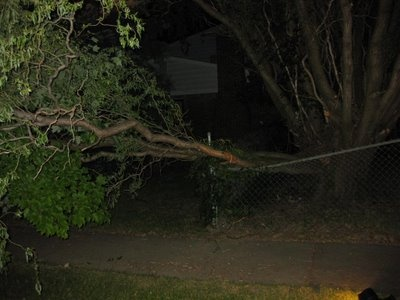 Welcome Home Surprise   --------------  Pictures of a tree that fell on my fence while i was gone.  Coming home from being out of town i found my fence crushed by a fallen tree.  At midnight i cut it with a hand saw.  chain saw, crushed fence, fallen tree, hand saw, town, tree fell on fence, work