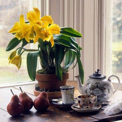 """Do niedawna storczyki - jako rośliny domowe - były mało osiągalnymi kwiatami """"z wyższej półki"""". Współczesne sposoby ich hodowli sprawiły, że teraz podziwiać"""