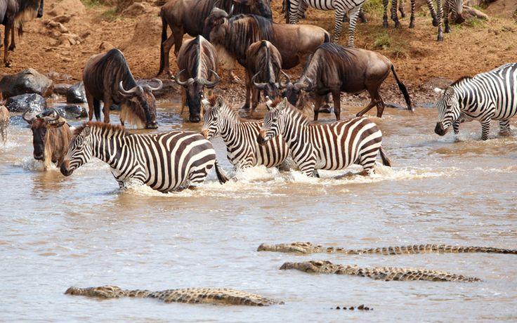 Cocodrilos del Nilo en reserva natural de Sudáfrica