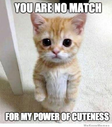 You're right, you win with your cuteness