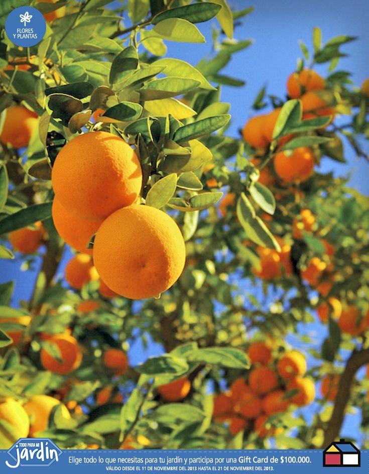 #Naranjos #Jardin