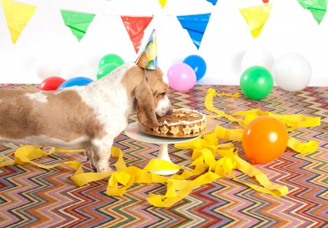 Peanut Butter Turkey Bacon Cake Recipe for Dogs. It's our party and we'll howl if we want to! See how Dash & Albert spokesdogs Googie and Impy are celebrating their first birthday with this exclusive recipe for a dog birthday cake: