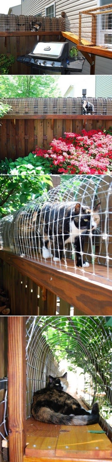 DIY Cat Enclosure for Indoor Cats that Wanna be Outside Cats...HAVE to have this for my cats.