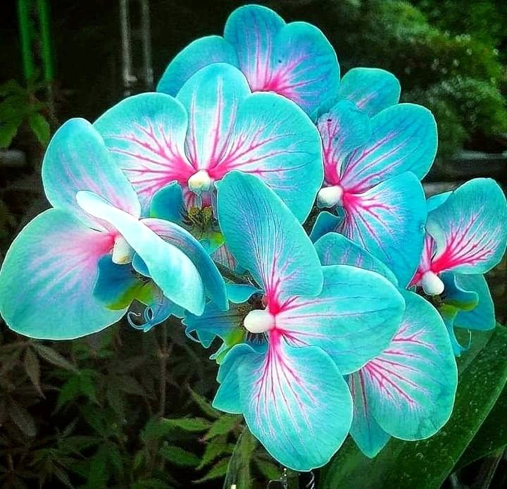 Las Flores Mas Raras Y Hermosas Del Mundo Unusual Flowers Strange Flowers Beautiful Flowers