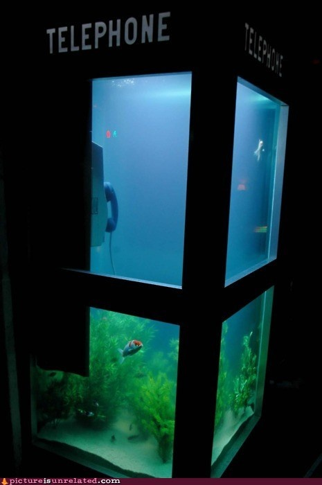 Dude.  DUDE.: Ideas, Fish Tanks, Booths Fish, Fishtank, Things, Phones Booths, Telephone Booths, Booths Aquarium, Phonebooth
