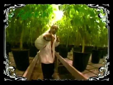 TOK Marijuana Ludacris Blueberry Yum Yum